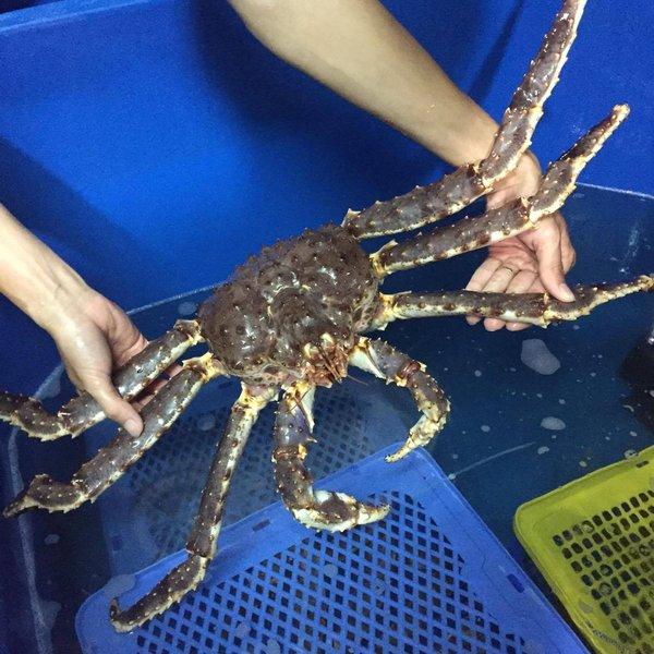 Cua King Crab Sống ( Kg )
